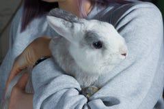 Une fille tenant dessus des mains un lapin gris blanc mignon photos stock