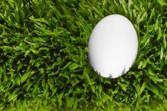 Une fin détaillée vers le haut d'un oeuf blanc, niché dans l'herbe verte W Images stock