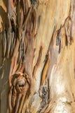 Une fin d'écorce d'arbre vers le haut d'A Image libre de droits