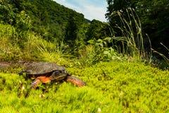 Une fin d'une tortue en bois images stock
