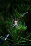 Une fin de l'araignée Photos stock