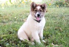 Une fin gentille de portrait de chien  Photographie stock