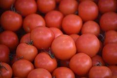 Une fin vers le haut de fond d'image a rempli de tomates rouges mûres fraîches Photographie stock libre de droits