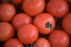 Une fin vers le haut de macro image a rempli de tomates rouges mûres fraîches Photographie stock