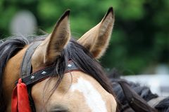 Une fin vers le haut des images des oreilles d'un cheval image stock