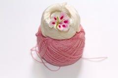 Une fleur à deux tons de géranium de rose Photos stock