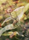 Une fleur photo stock
