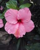 Une fleur Image stock