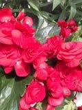 Une fleur Image libre de droits