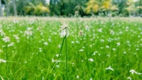 Une fleur blanche Photographie stock libre de droits