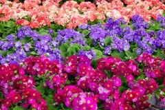 Une fleur colorée Photo stock