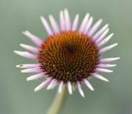 Une fleur d'été Photos stock