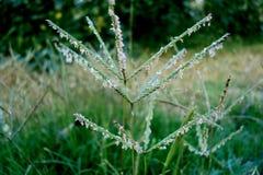 Une fleur d'herbe Images libres de droits
