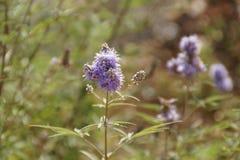 Une fleur dans la nature Royalty Free Stock Photo