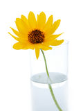 Une fleur dans le vase Image libre de droits