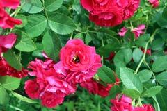 Une fleur dans un jardin botanique à Kiev Images stock