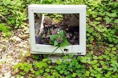 Une fleur de forêt se développe d'un vieux moniteur jeté dans la forêt Photos libres de droits