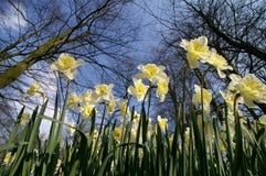Une fleur de jaune de champ Images stock