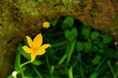 Une fleur de ma couleur image stock
