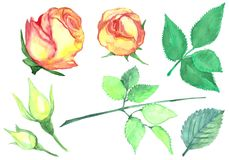 Une fleur de rose Illustration Stock