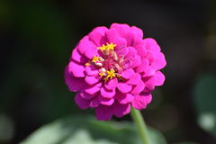 Une fleur en Californie Photographie stock