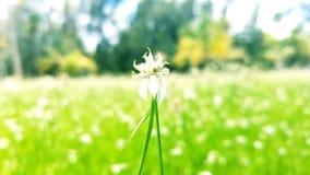 Une fleur entre les fleurs Image libre de droits