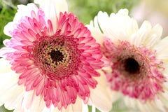 Une fleur est une chose de la beauté pour calmer votre esprit photo stock