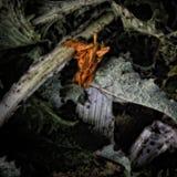 Une fleur fanée de souci photographie stock libre de droits