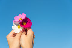 Une fleur freshy dans le ciel image libre de droits