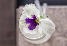 Une fleur garnissant un cocktail clair Image stock
