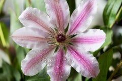 Une fleur gentille Image stock