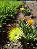 une fleur jaune Photos libres de droits