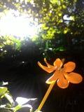 une fleur jaune Photo stock