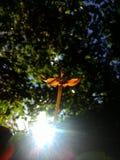 une fleur jaune Image libre de droits