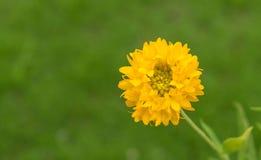 Une fleur jaune avec le fond brouillé photographie stock
