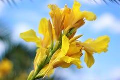 Une fleur jaune dans la perspective du ciel bleu photos stock