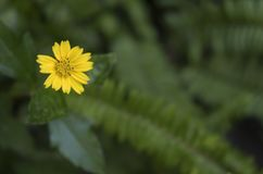 Une fleur jaune sur le fond vert de tache floue Photographie stock