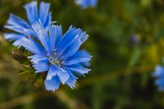 Une fleur lumineuse est une merveille de nature dans une forêt sauvage photo stock