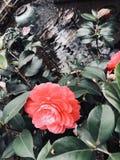 Une fleur pour le jardin Photos libres de droits