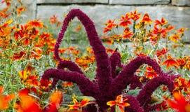 Une fleur pourpre peu commune dans le jardin photos stock