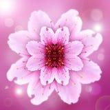 Une fleur rose Photos stock