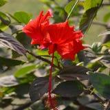 Une fleur rouge Photographie stock