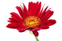 Une fleur rouge 3 Photo stock