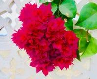 Une fleur rouge de feuille Photos stock