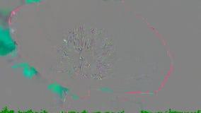 Une fleur rouge de pavot avec l'abeille banque de vidéos