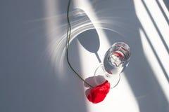Une fleur rouge de pavot sur la table blanche avec la lumière et les ombres du soleil de contraste et le verre de vin avec la vue images libres de droits
