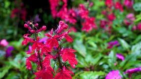 Une fleur rouge peu commune sur un fond brouillé très beau clips vidéos