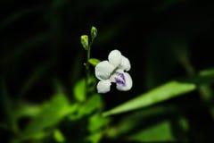 Une fleur sauvage Images libres de droits