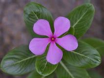 Une fleur sur le jardin Photo stock