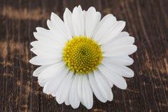 Une fleur sur une surface en bois Photos libres de droits